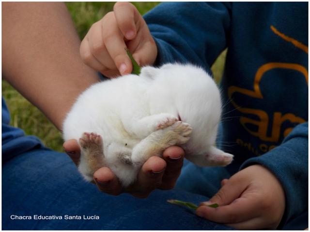 Participando en una clase sobre conejos - Chacra Educativa Santa Lucía