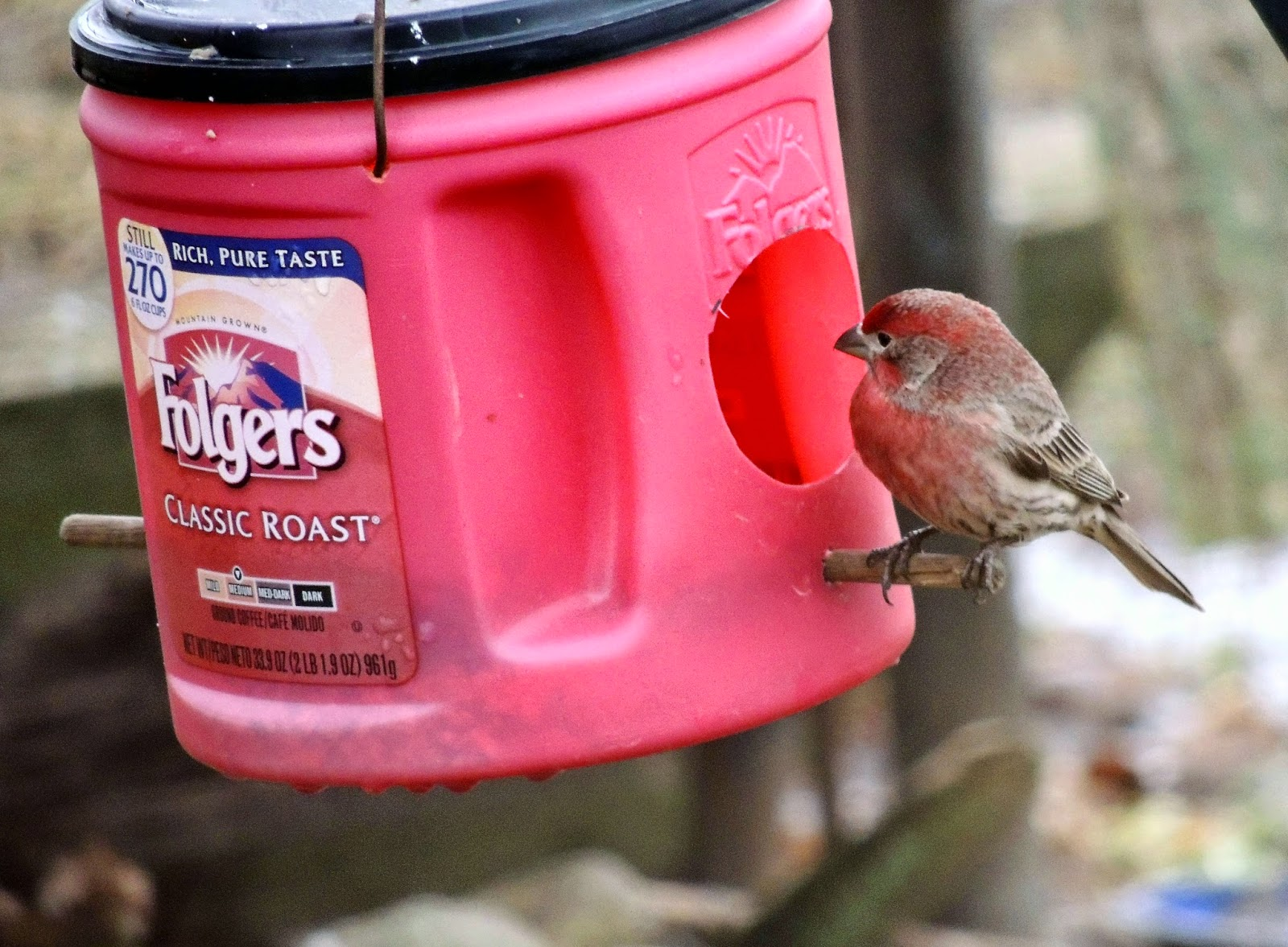 Angelgirlpj: Coffee Can Bird Feeder: DIY Recycle And Reuse