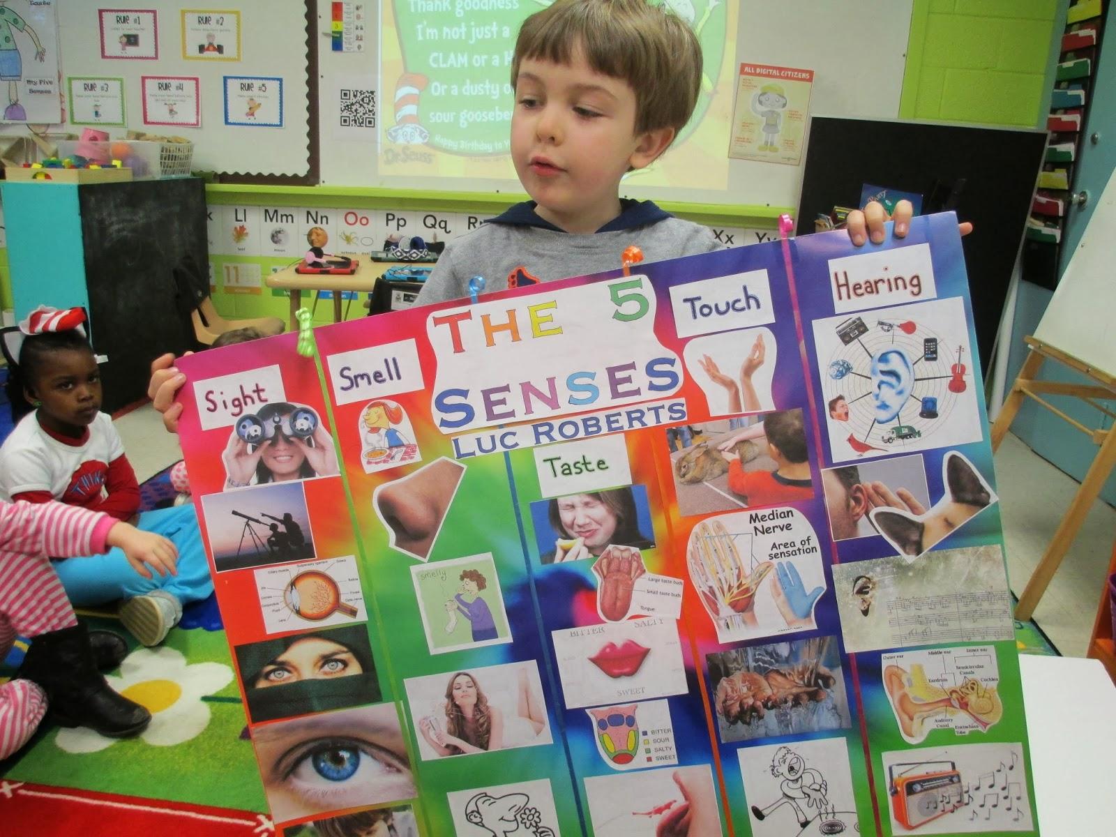 Pre K Sprouts Five Senses 2 Week Stem Unit