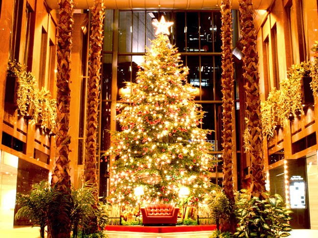 Most Beautiful Christmas Trees Pictures