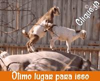 http://www.calangodocerrado.net/2016/09/cabra-que-deu-em-cima-do-rinoceronte.html