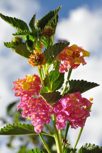 Resultado de imagem para imagens de lindas flores