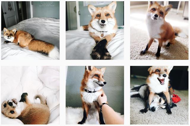 My Favourite Instagram Accounts juniperfoxx