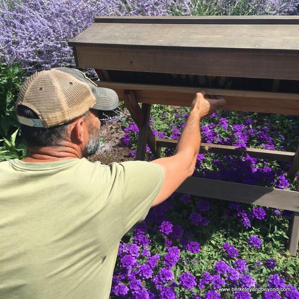 Master Gardener Tucker Taylor tends bees in gardens at Kendall-Jackson Wine Estate & Gardens in Fulton, California