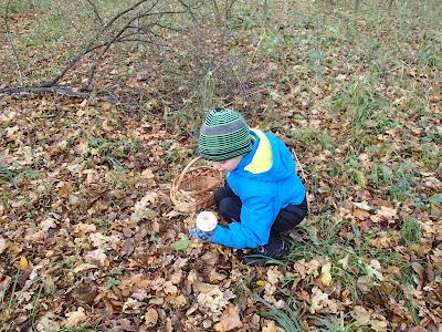 gzyby 2016, grzyby w październiku, grzyby w okolicy Krakowa, grzyby w Puszczy Niepołomickiej, czubajki, gąsówki, opieńki