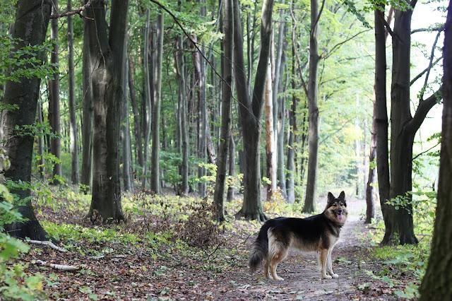 Spacer z psem. O czym warto wiedzieć ?