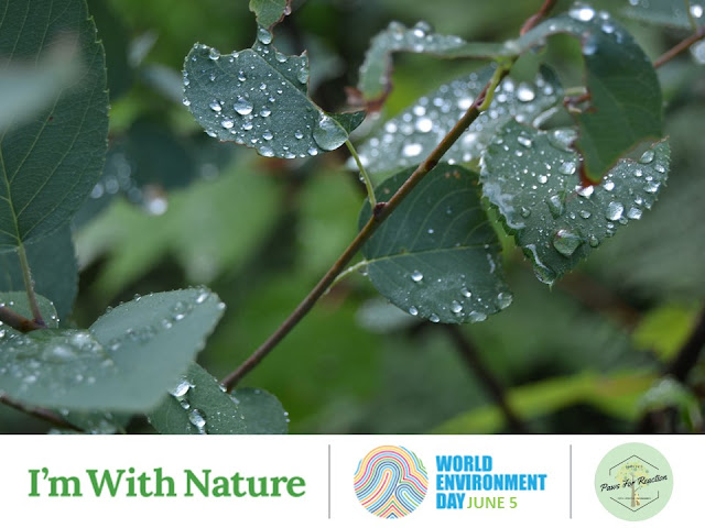 World Environment Day: Connecting people to nature June 5