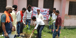 planting-by-student-wing-in-rk-college-madhubani
