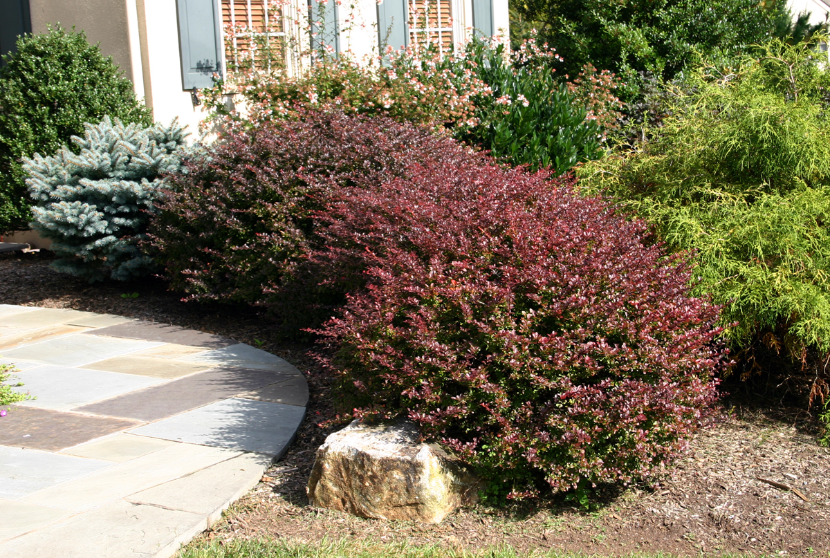 Il mondo in un giardino consigli per la potatura delle siepi for Cespugli giardino
