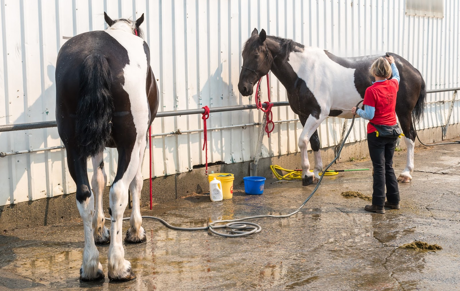 Watch How to Vaccinate Horses video