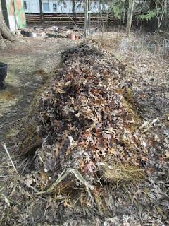 BeetleBump - Sticks, brush and leaves