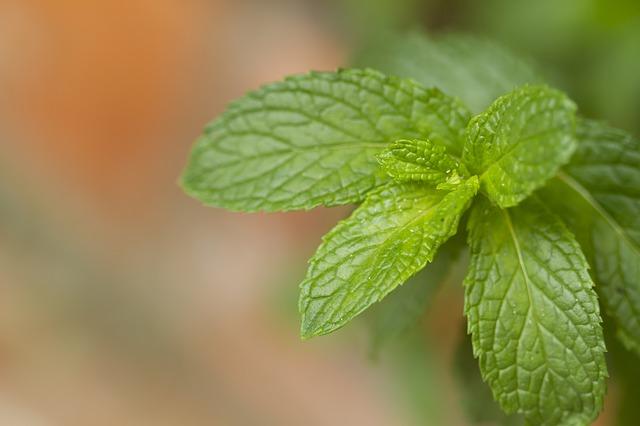 12 medicamentos fitoterápicos do SUS