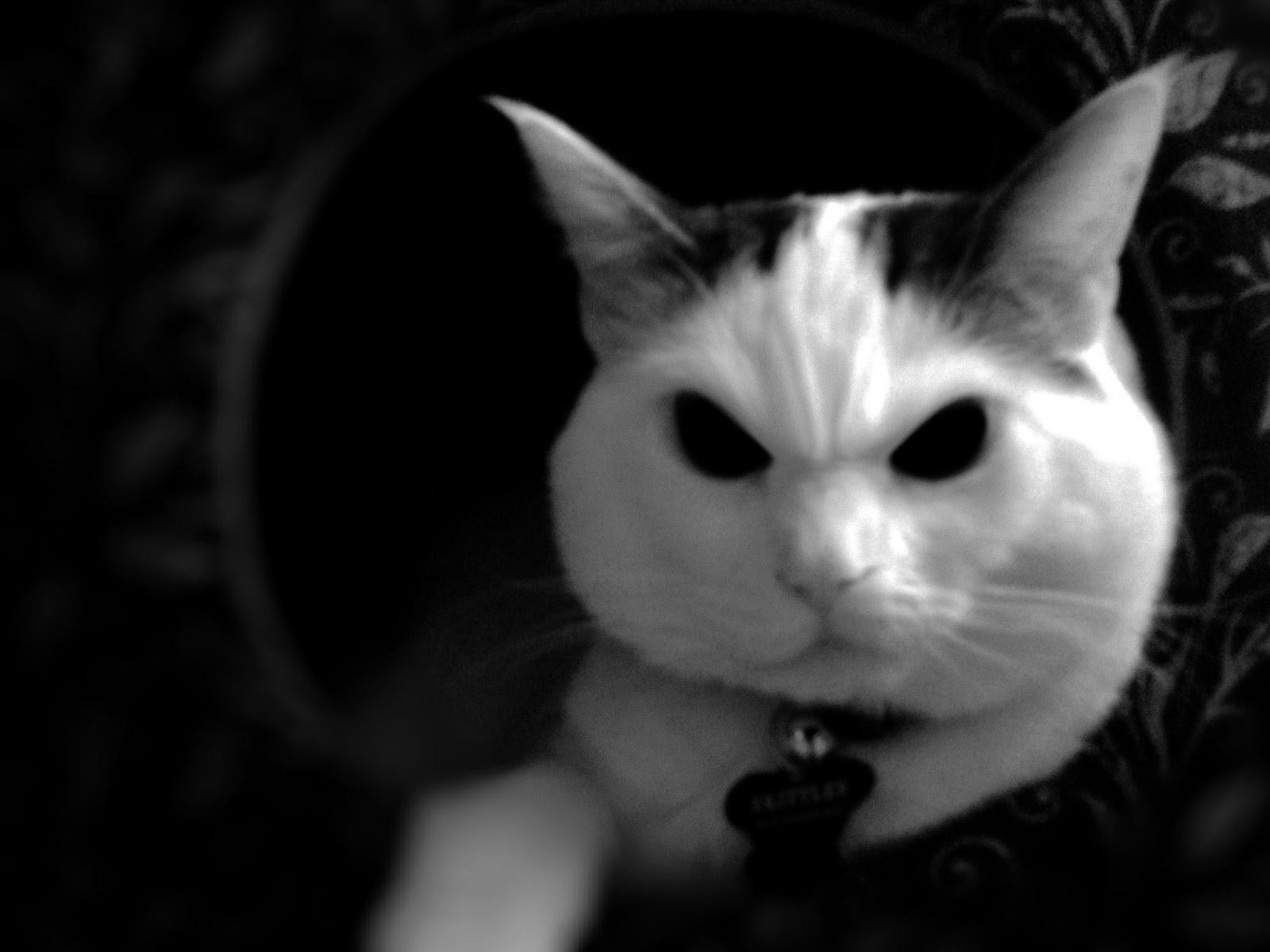 cat evil skittles