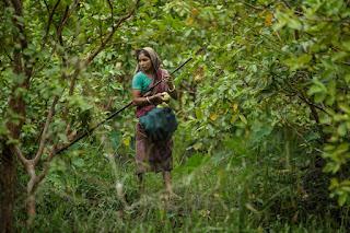 Guava markedet i Bangladesh