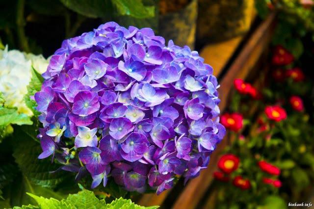 hình ảnh hoa đẹp nhất thế giới 6