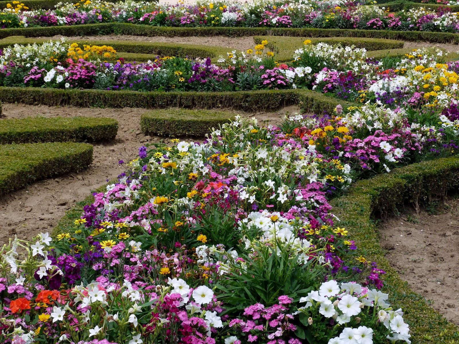 26 Gambar Pemandangan Kebun Bunga Istimewa