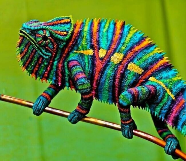 22 Breathtaking Images Of Things You've Never Seen Before - A multicolored chameleon