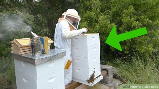 Μελισσοκομία και προβλήματα με τη μέση: Η λύση στις συνεχόμενες μεταφορές και τις επιθεωρήσεις!
