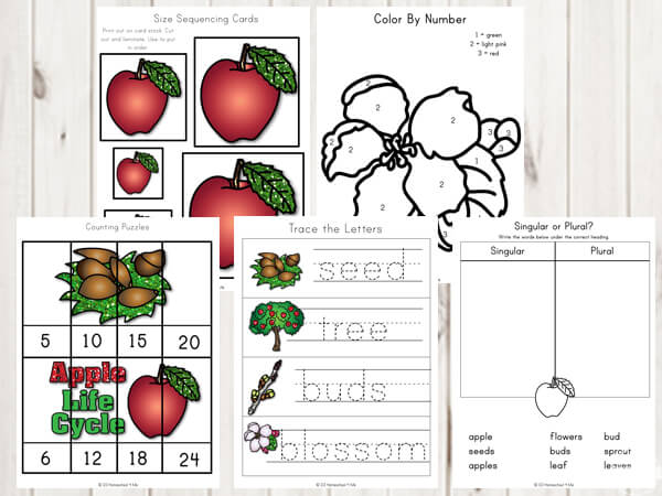 apple-size-sequencing-color-by-number-skip-counting-science-vocabulary-kindergarten-first-grade