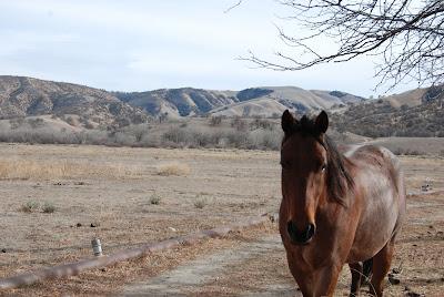 horse drought book caroline gerardo