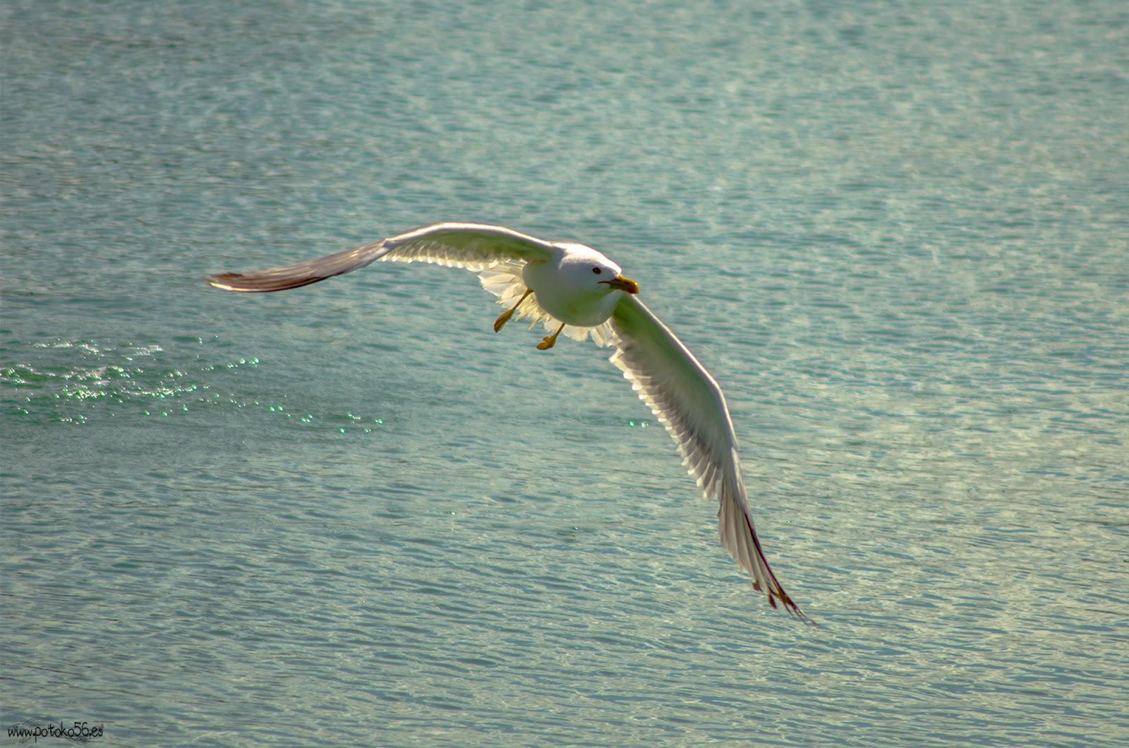 una gaviota en la dársena del muelle de Rota alzando el vuelo