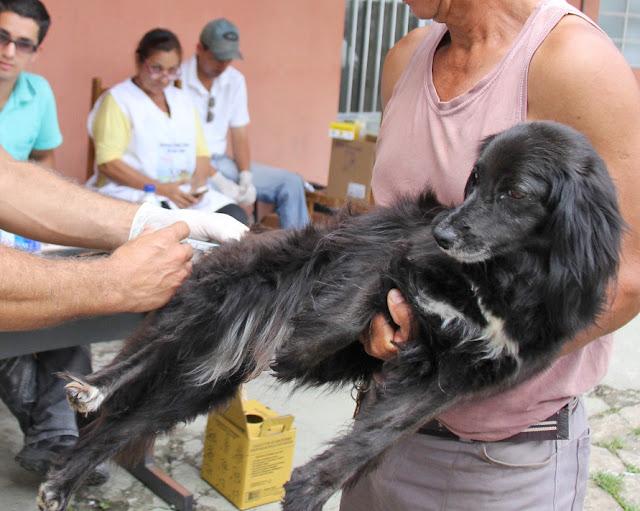 Quem ama cuida: Vacine seus cães e gatos contra a raiva em Registro-SP