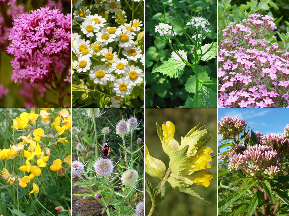 Creating a Wildflower Meadow - Lovely Greens
