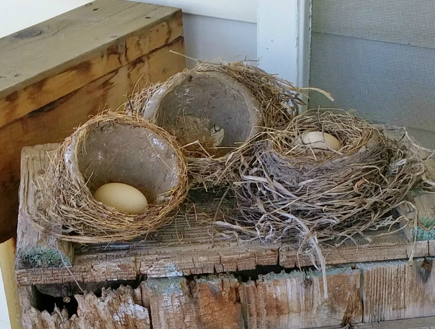 collection of bird's nests