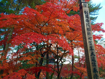 南禅寺の紅葉