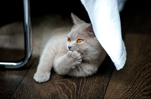 How to Prevent Your Cat From Getting Fleas