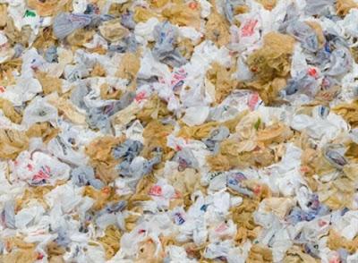 túi nilon ô nhiễm môi trường