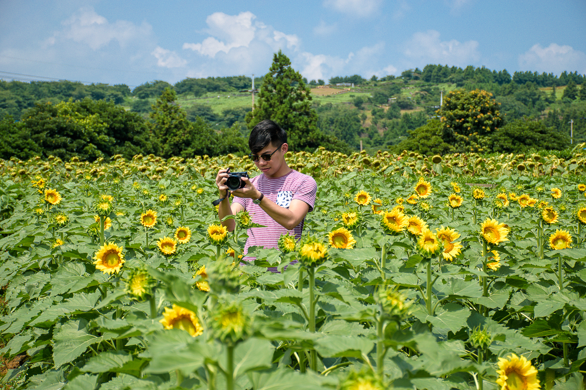 sunflower field jeju korea outfit ootd travel outfits