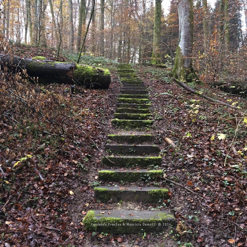 escada mullerthal trail Luxemburgo