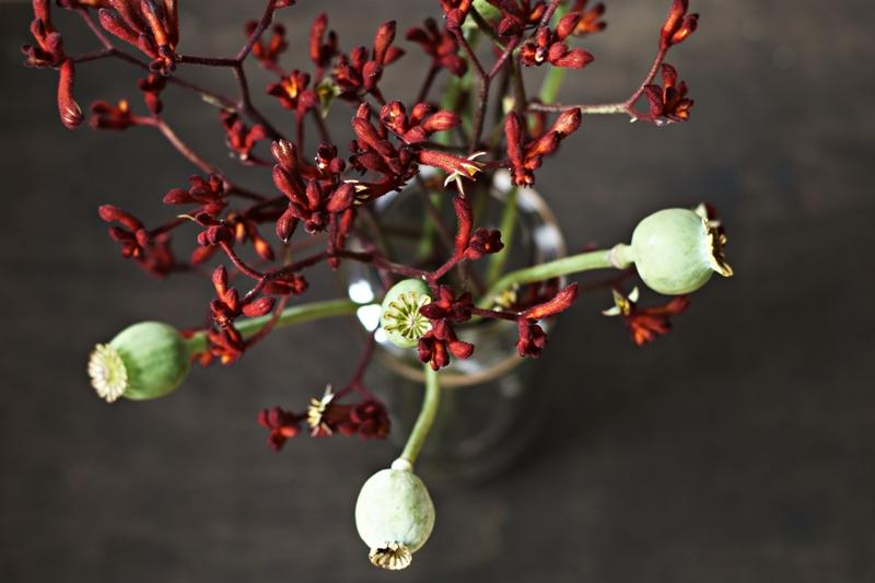 Blog + Fotografie by it's me! - Flower Friday, Mohnkapseln und dunkelrote Blütenzweige von oben gesehen