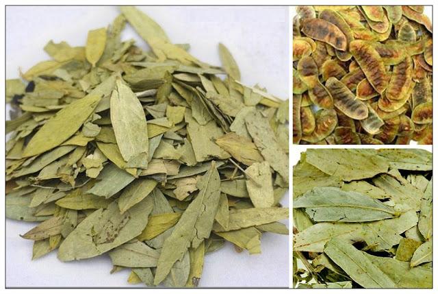 Lá và quả khô Phan Tả Diệp - Cassia acutifolia - Cassia angustifalia - Nguyên liệu làm thuốc Nhuận Tràng và Tẩy