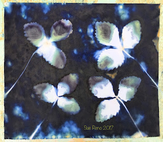 Wet cyanotype_Sue Reno_Image 237