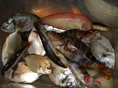 pescuit la Salonikios
