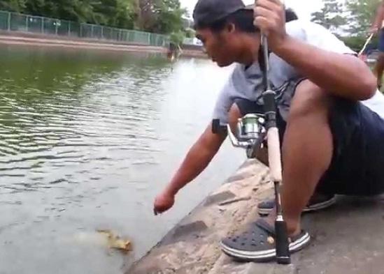 Membuat Umpan Mancing Ikan Mas Sendiri