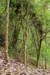 dry leaves on ground underneath trees