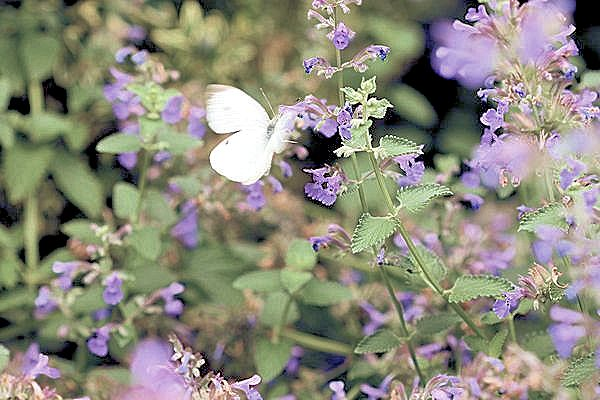 A Guide To Northeastern Gardening Garden Bloggers Bloom