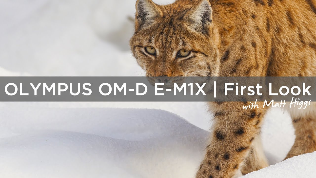 Olympus OM-D E-M1X | First Look and Hands On. Wildlife in the Bavarian National Park