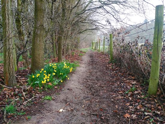 Photograph of the path leading from Lamer Wood to Ayot St Lawrence. Image by Hertfordshire Walker released under Creative Commons BY-NC-SA 4.0