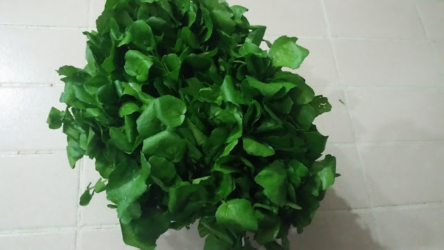 Fresh and green watercress vegetable