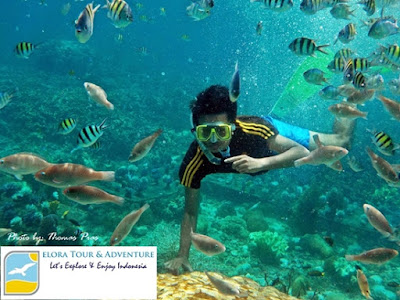 Paket Happy Snorkeling Pahawang Elora Tour & Adventure