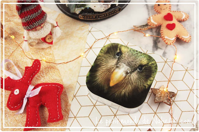 Kakapo de Nouvel Zélande