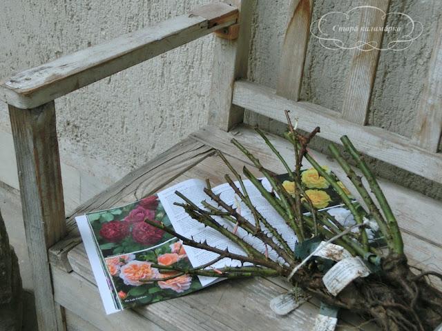 Розы Дэвида Остина, остинки, David Austin Roses