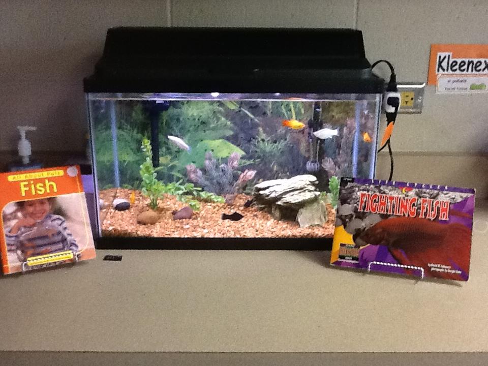Digital Meanderings Pets In The Classroom