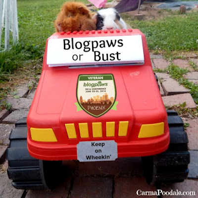 "2 Guinea pigs in a toy truck with ""Blogpaws or Bust"" on windshield."
