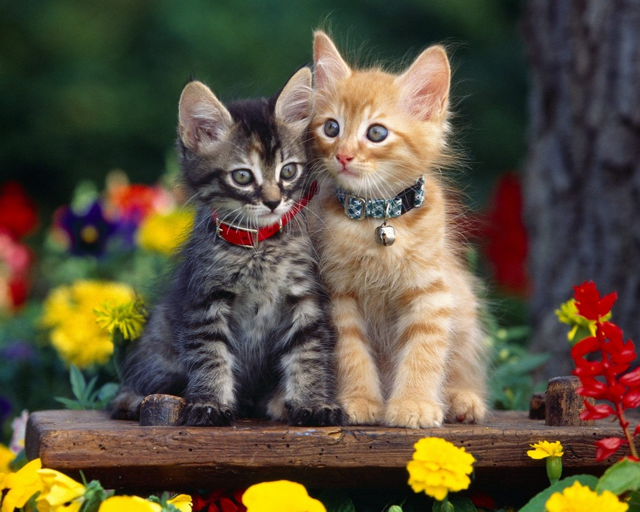 Flower In The Garden New Cats Wallpaper Cute Funny Beautiful