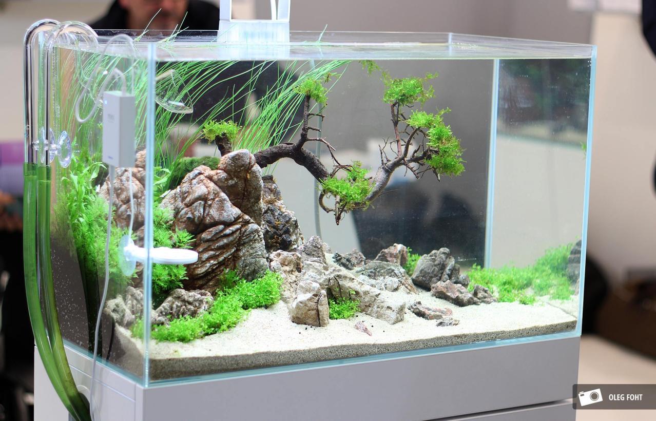 Inspirasi Aquascape Mini Di Rumah Ikan Hiasku